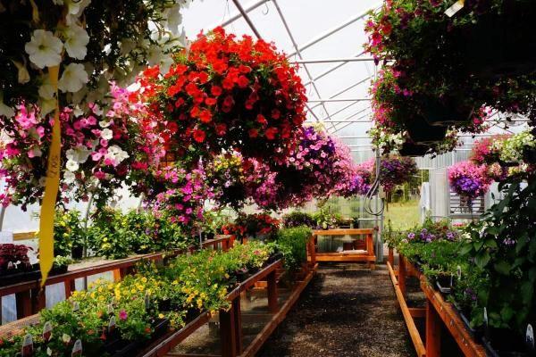 Garden Centers In Washington State
