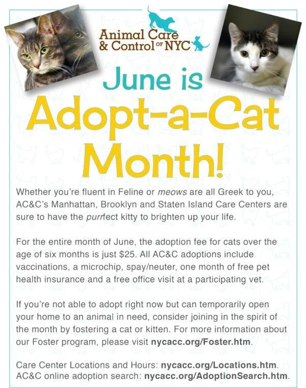 Animal Care Centers On Cat Adoption Pet Care Nyc