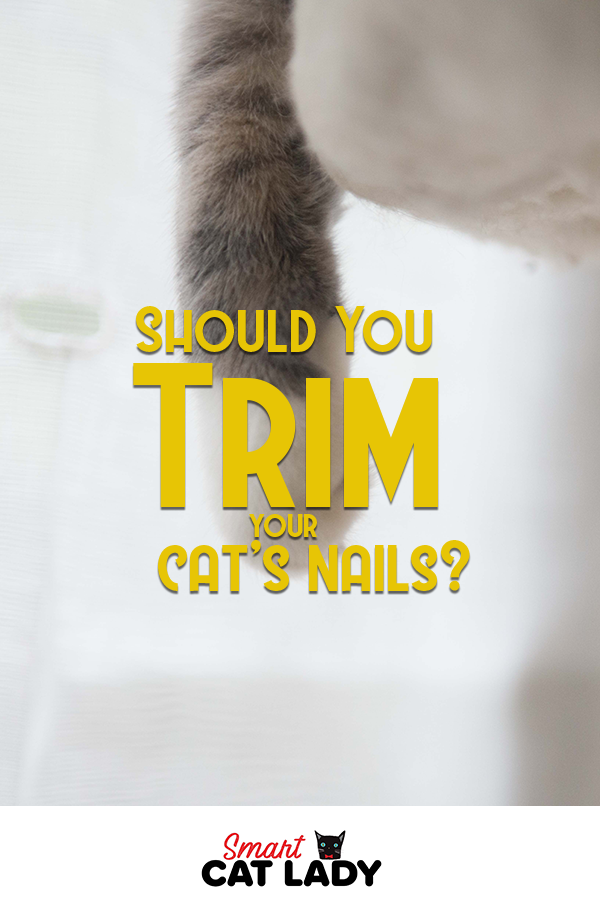 Should You Trim Your Cat S Nails Cat Grooming Trim Cat Nails