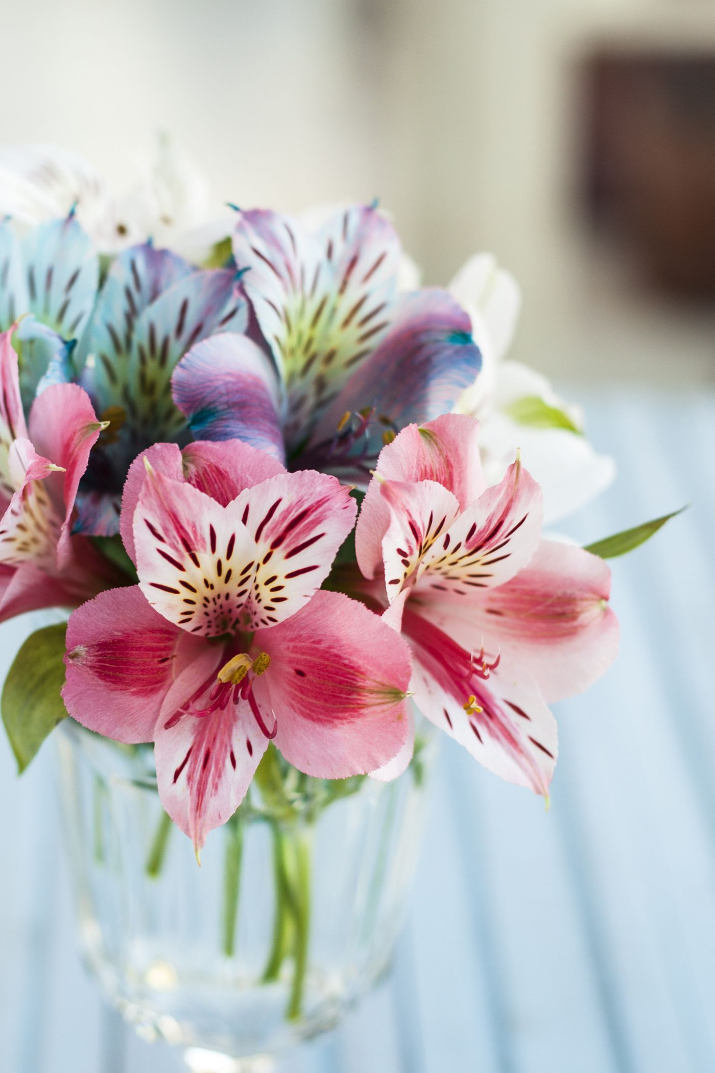 The Meaning Behind Popular Valentine S Day Flowers Flower Meanings Romantic Flowers Alstroemeria