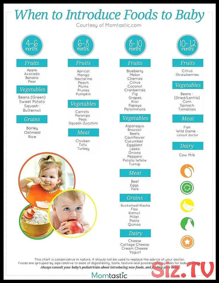 The hidden truth about the best food for a 4 month old baby How do I make my owl  The hidden truth about the best food for a 4 month old baby How do I make my owl