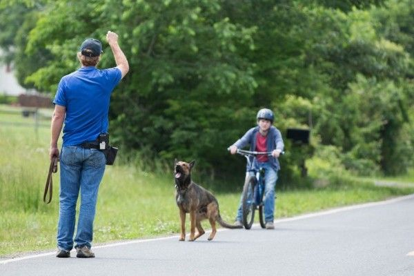 7 Questions With The Dog Trainer From The Movie Max Max Movie