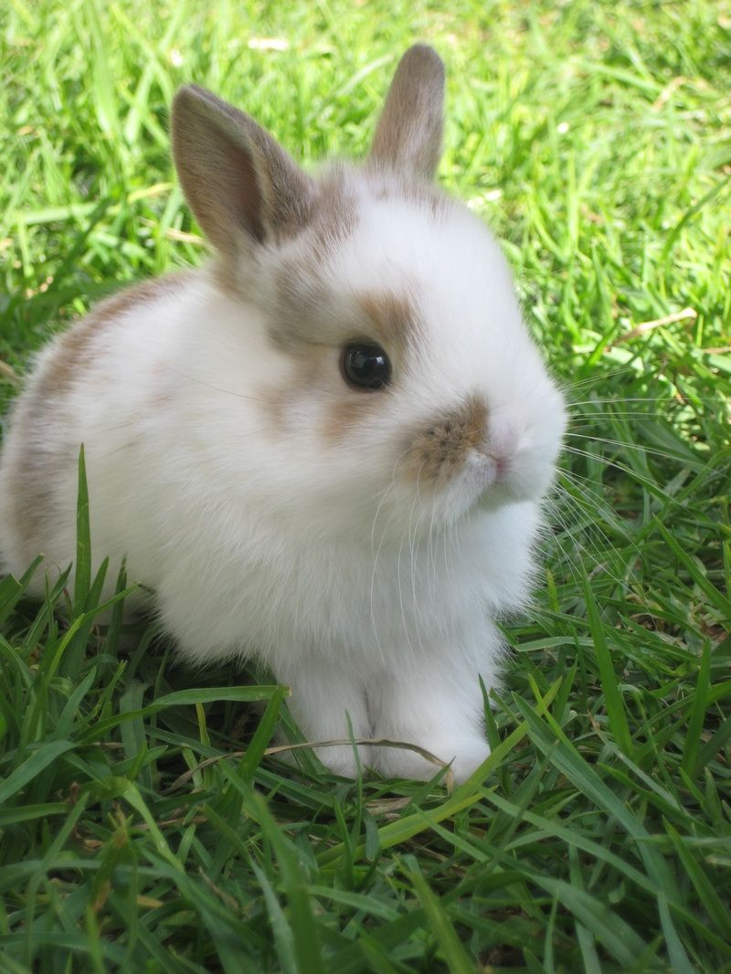 Cute Bunnies For Sale Home Cute And Cuddly Bunnies Cute Baby
