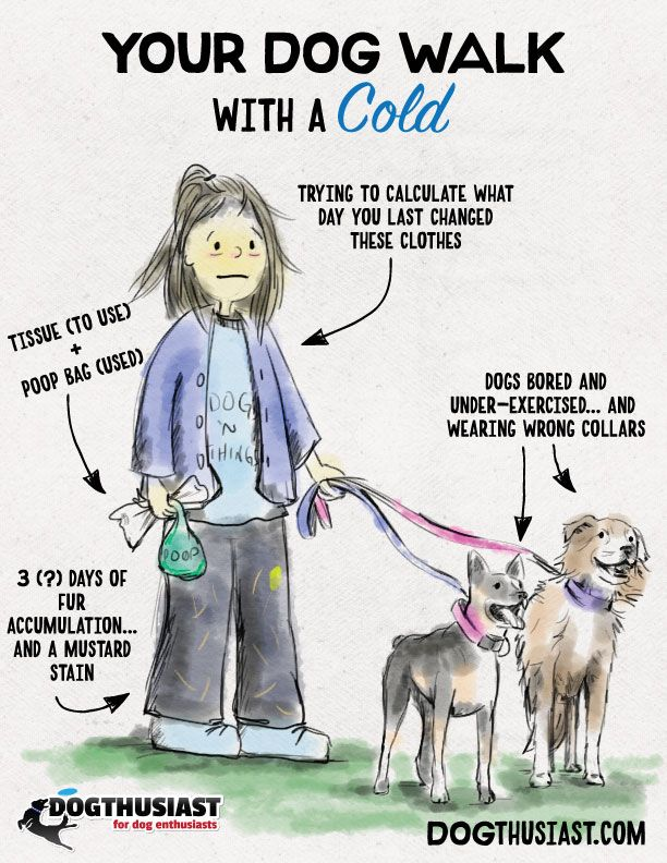 Walking Your Dog With A Cold True Story Yo Dog Activities