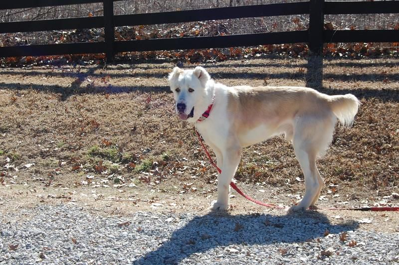 Adopt Atlas On Dog Names Beautiful Dogs Dogs