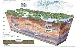 Did You Know Facts Rainforest Facts Amazon River Rio