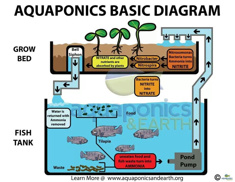Aquaponics Diagram Backyard Aquaponics Aquaponics 400 x 300