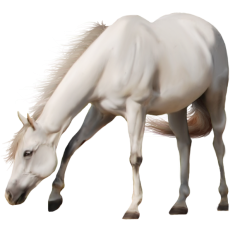 Horse Png Image Free Download Picture Photoshopped Animals Horses White Horse