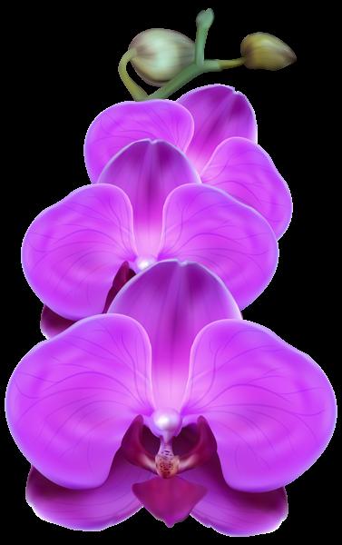 Purple Orchid Png Transparent Clip Art Image Orchids Painting Purple Orchids Flower Painting