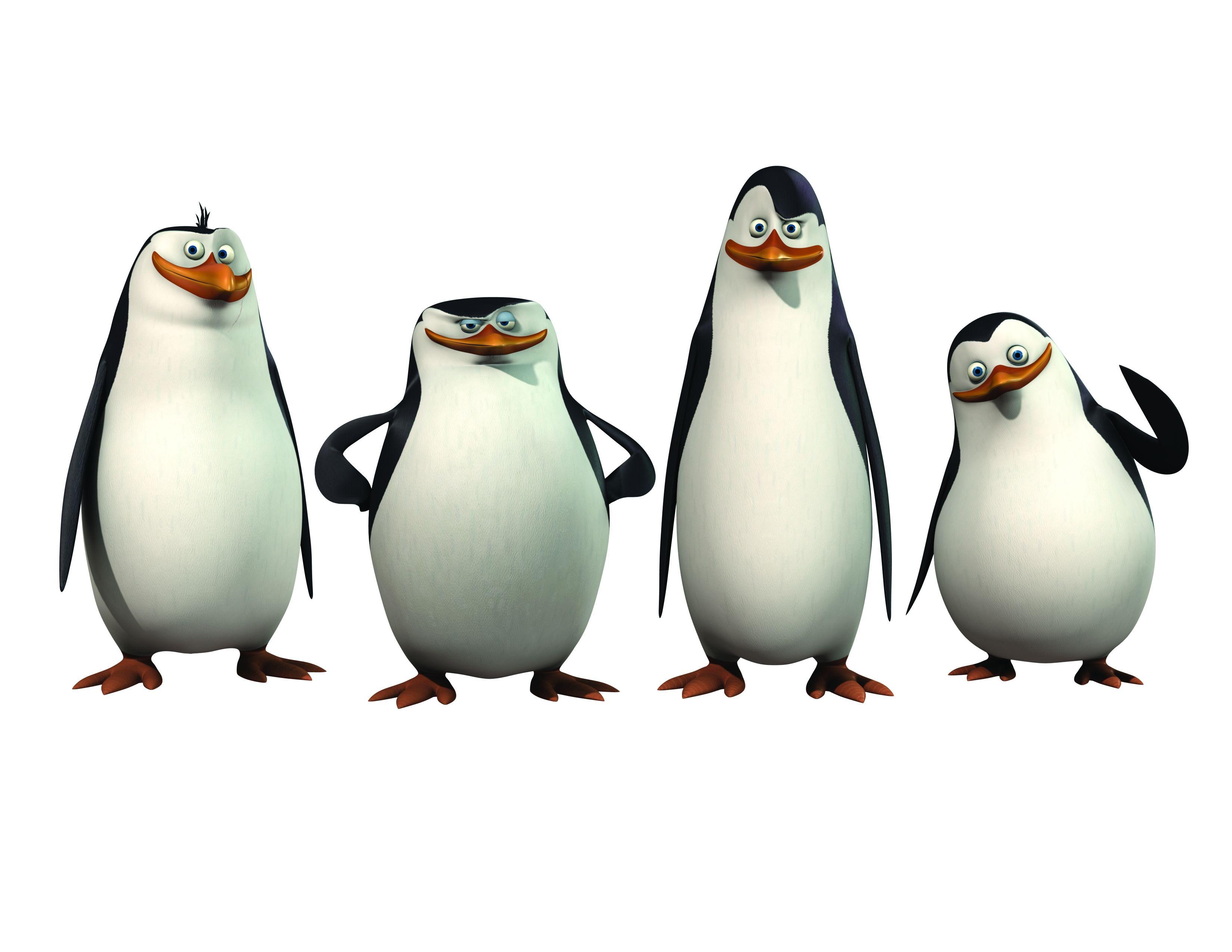 Pinguinos De Madagascar D Penguins Of Madagascar Penguins Penguin Pictures