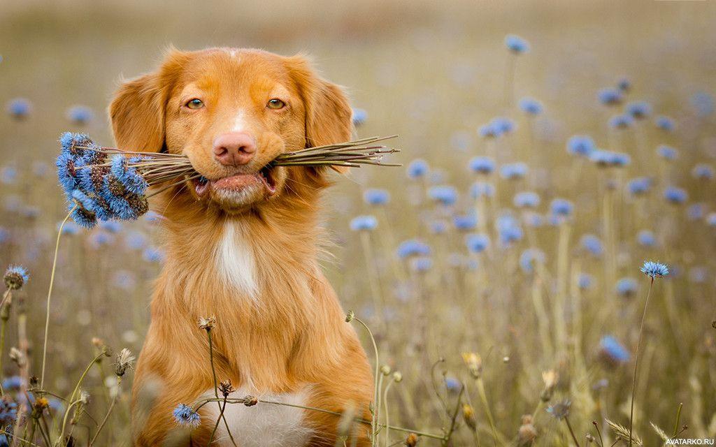 картинка доброго животного всегда очень красиво