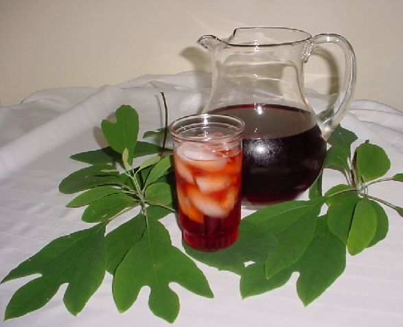 Sassafras Tea~My Mom would make this every year when I was a little girl~