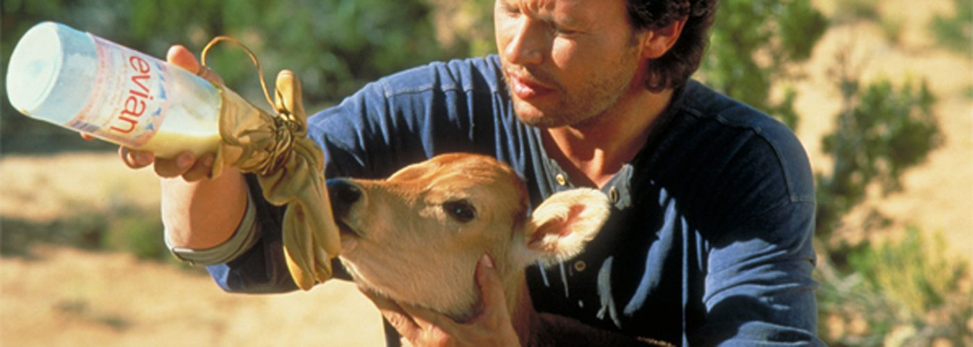 City Slickers Norman The Cow City Slickers Old Movies Billy Crystal