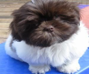 Adopt Cadbury On Petfinder Cute Puppies And Kittens Kitten Adoption Pets