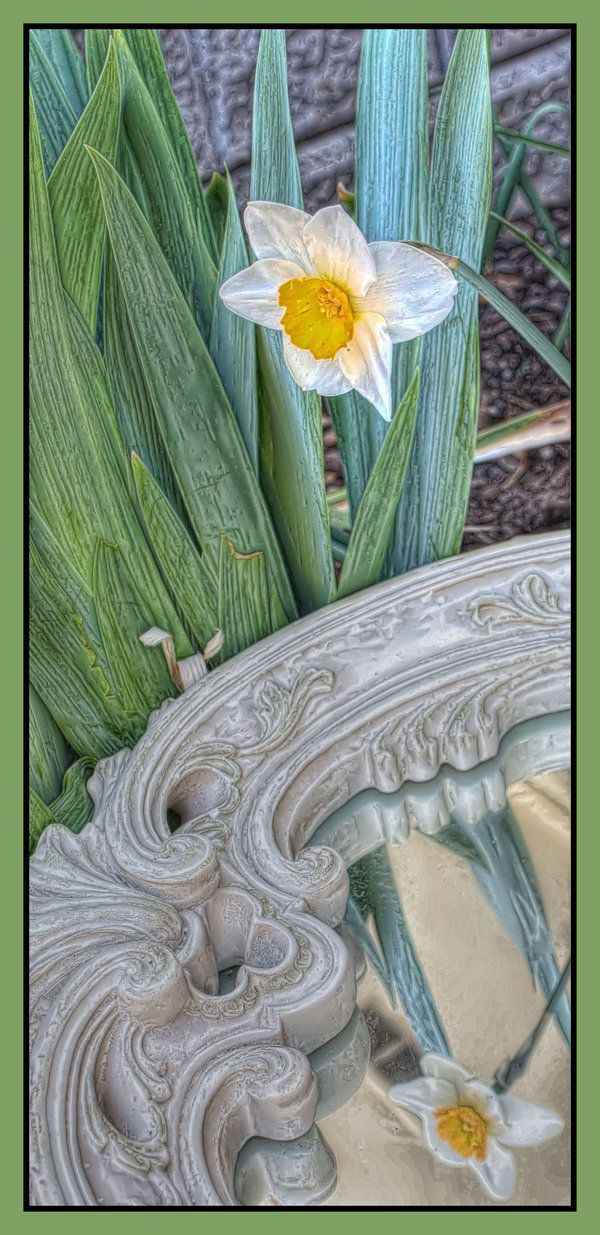 Narcissus Flower From The Greek Mythology Story Echo And