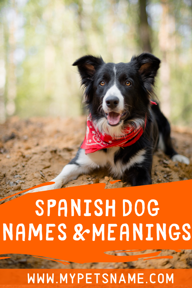 Spanish Dog Names And Meanings Dog Names Names With Meaning Spanish Names