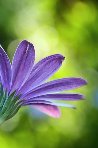 foto de Purple Flower 5 Android Wallpaper HD   Flower iphone wallpaper ...