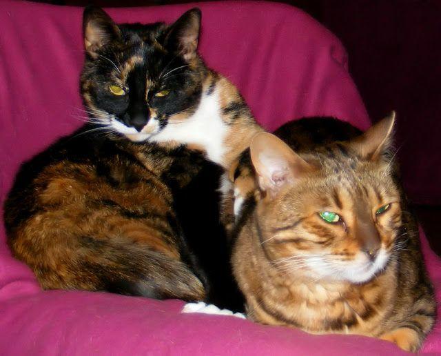 Smuggish Kitties Kitty, Cats and kittens, Kittens