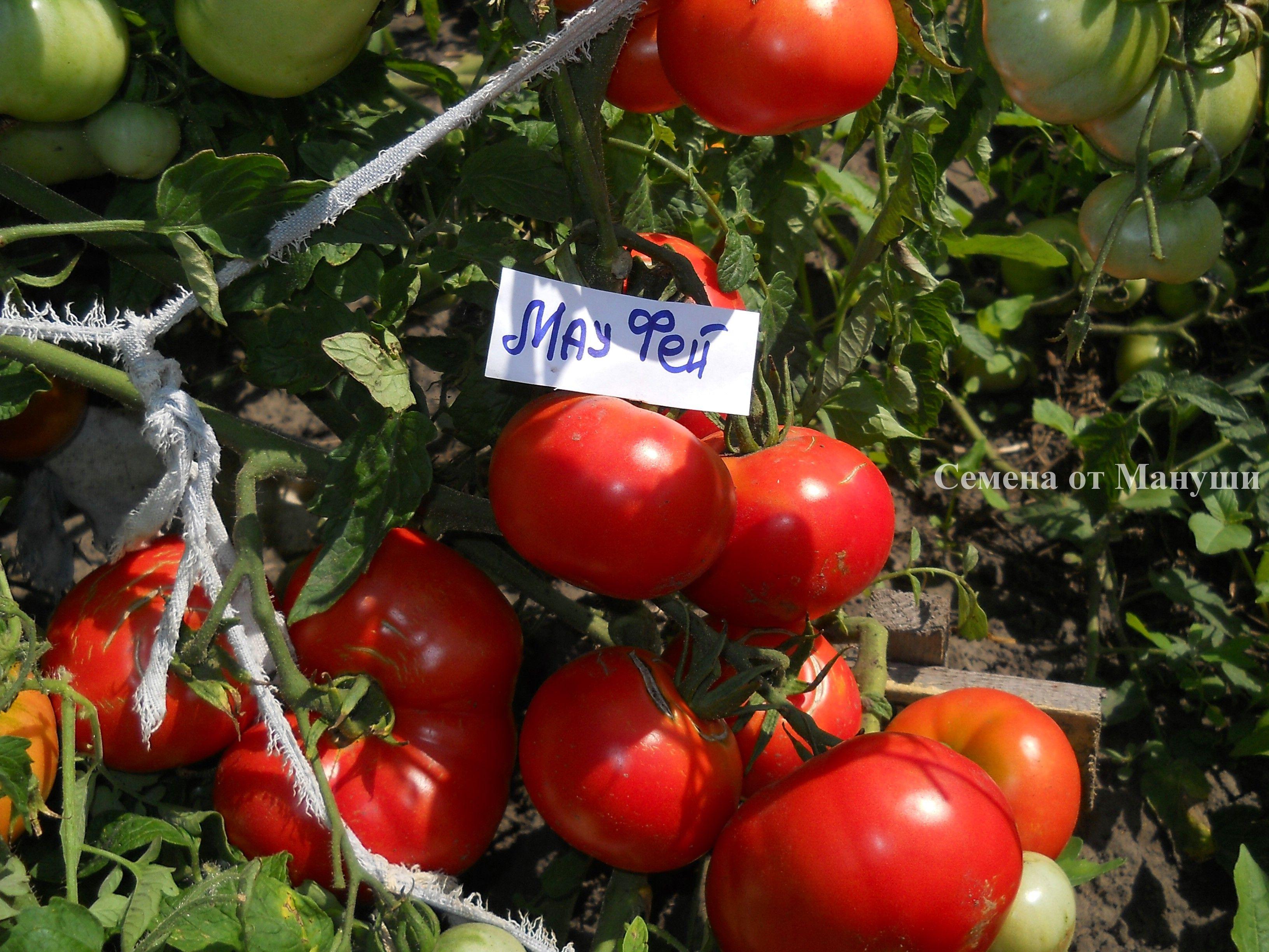 купить томаты семена делай деньги