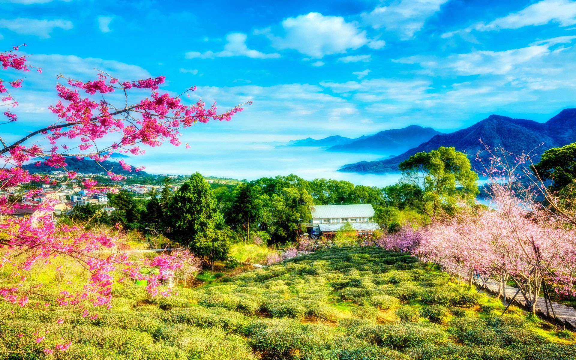 China Cherry Trees Mountains Landscape Landscape Wallpaper Spring Scenery Scenery Wallpaper