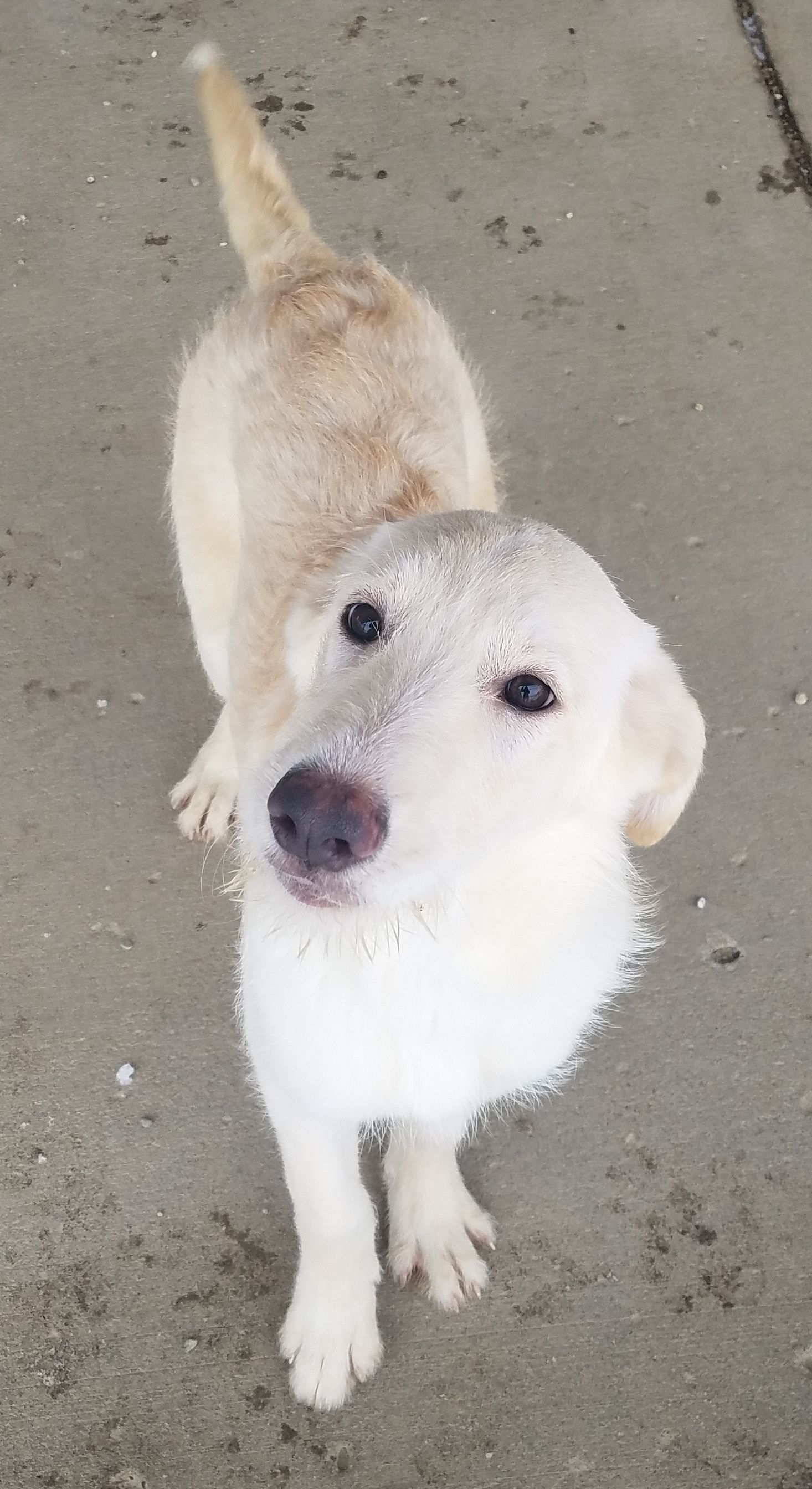 Adopt Peaches on Poodle mix dogs, German shepherd dogs