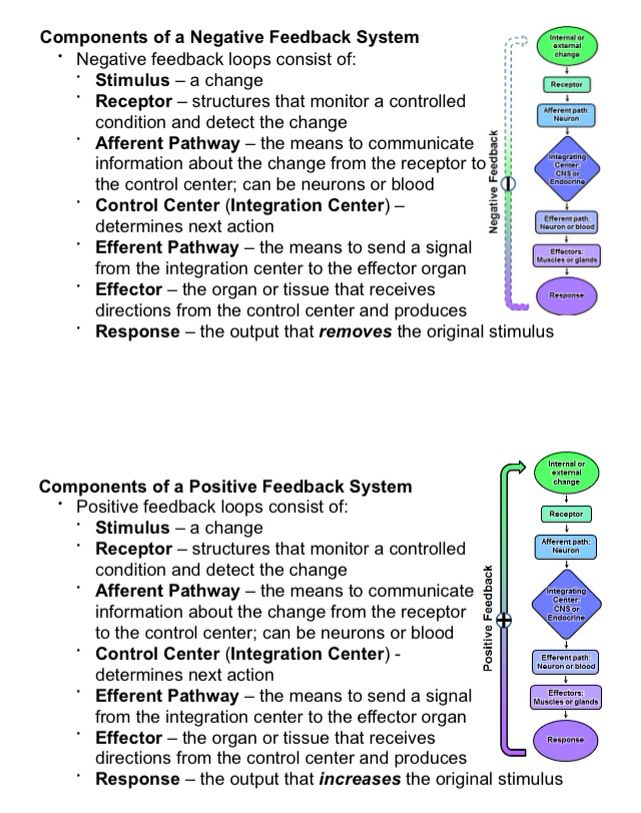 Negative feedback and positive feedback loops for physiology ...