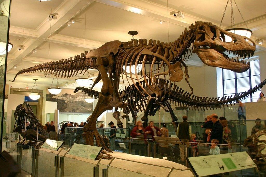 Tyrannosaurus Rex Inspiration Anatomy Pinterest Anatomy