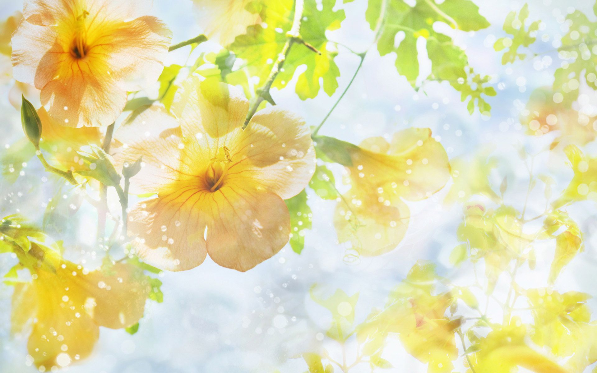 yellow flowers wallpapers pack - photo #28