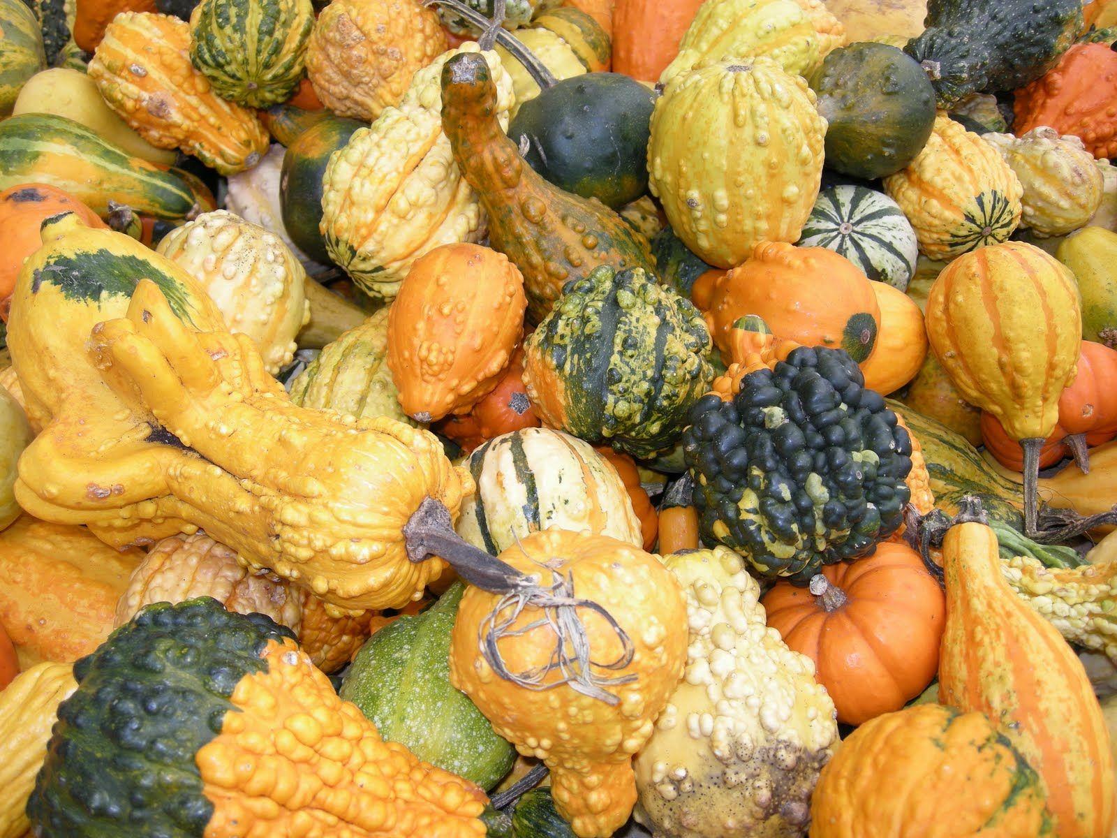 Mini gourds! Pumpkin, Vegetables, Food