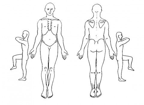 Picture Of The Human Outline Of Human Body Front And Back