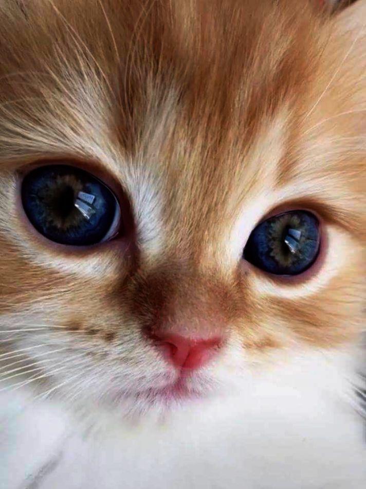 Blows Raspberrries Kittens Cutest Cute Cats Cute Baby Animals