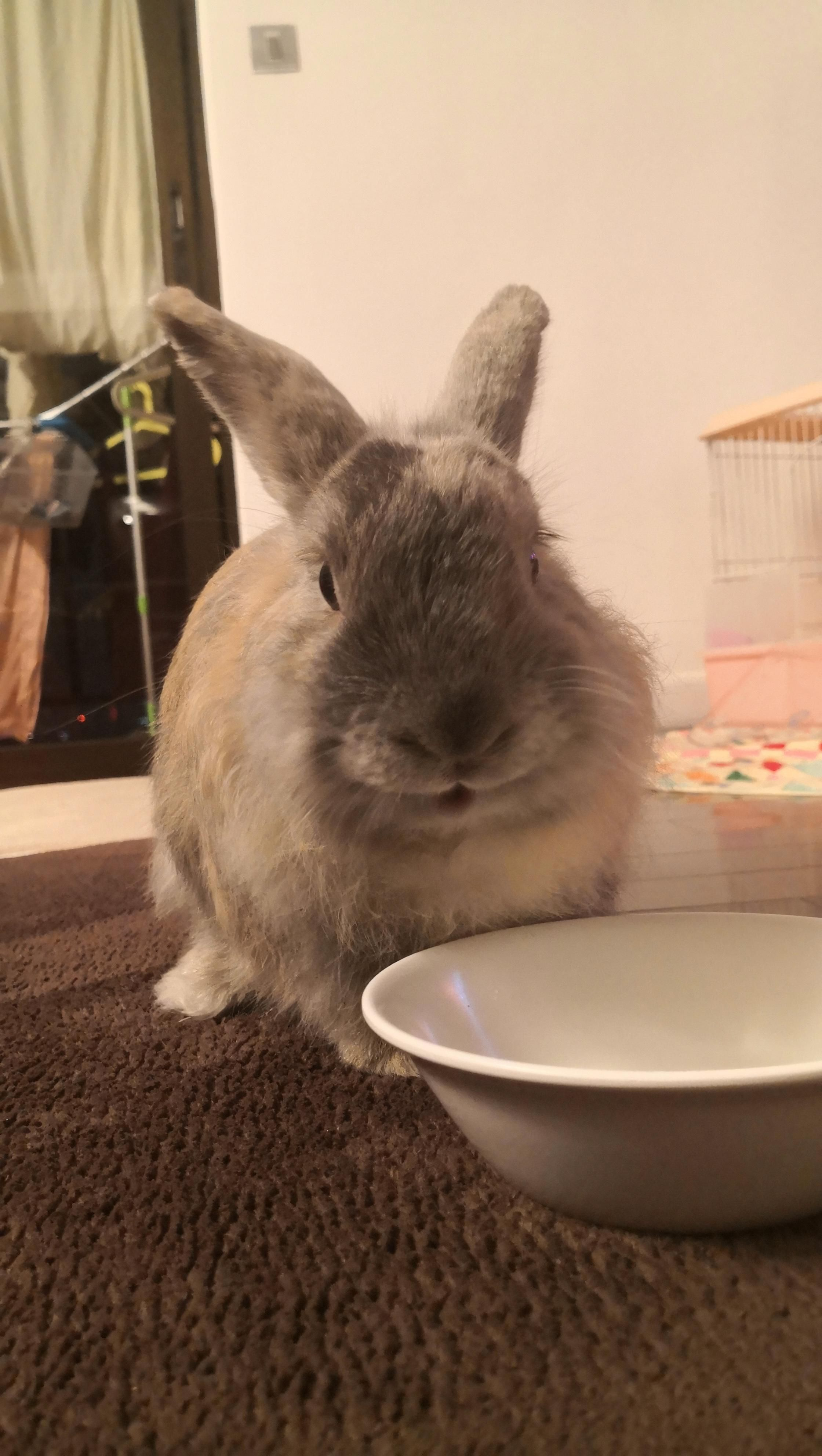happy happy bean! -Rabbit Bunny tips care and ideas! #rabbitlovers