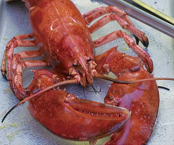 The 25+ best How to grill lobster ideas on Pinterest   Grill lobster tail recipe, Grilled ...