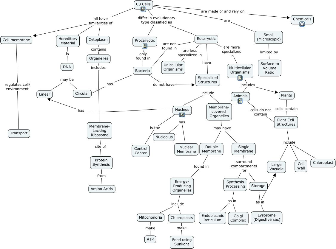 Anatomy Cell Concept Map Answer Key