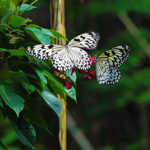 The Butterfly Farm in Bulacan, Philippines