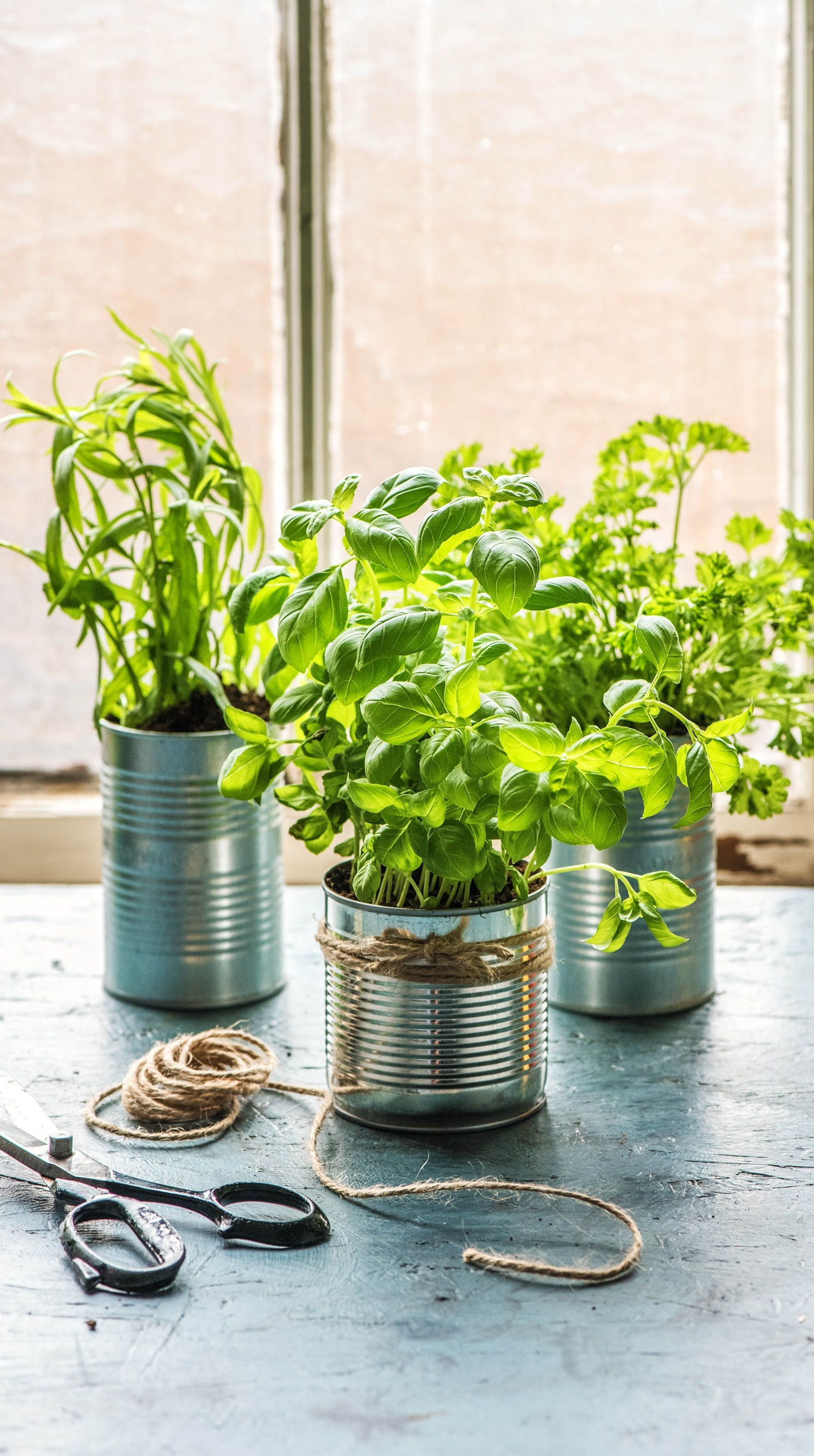 selbstgemachter kr utergarten k che how to tipps tricks zum kochen garden plants diy. Black Bedroom Furniture Sets. Home Design Ideas