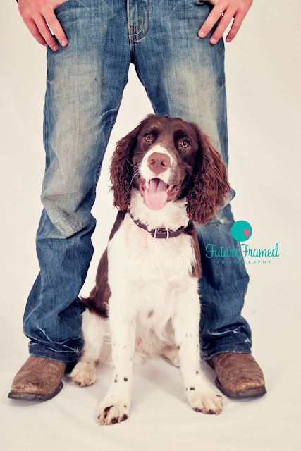 Tommy, Springer  Dog, puppy    Future Framed Photography, Sturgis, SD  Pet Photography