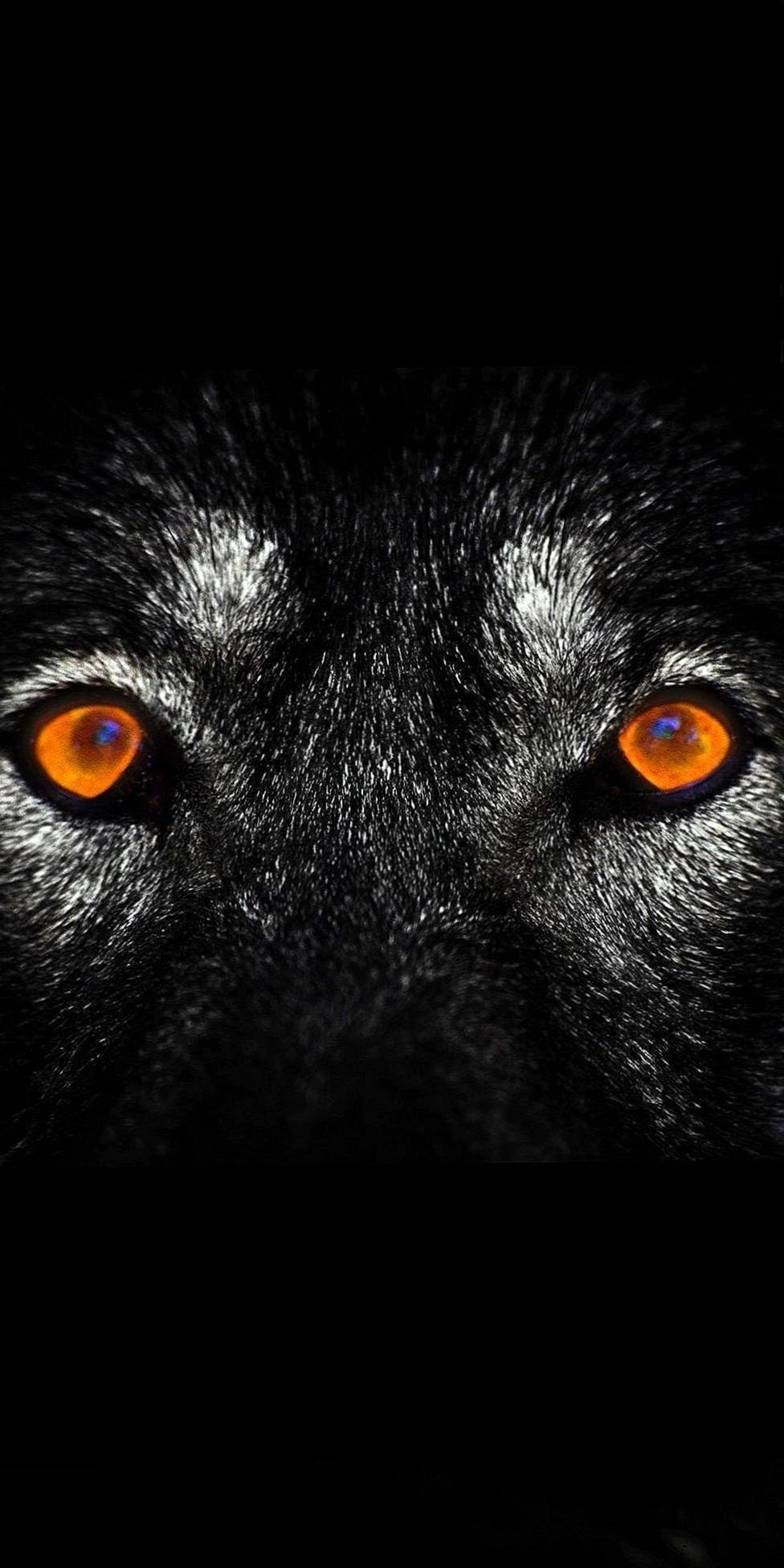 Black Wolves Eyes Wallpapers Wolf Wallpapers Pro Wolf Eyes Wolf Wallpaper Eyes Wallpaper