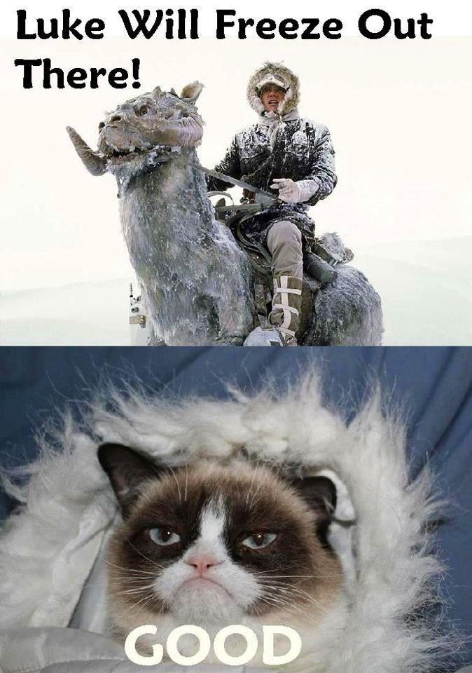 Grumpy Cat Grumpy Cat Meme Funny Grumpy Cat Memes Funny Cat Memes