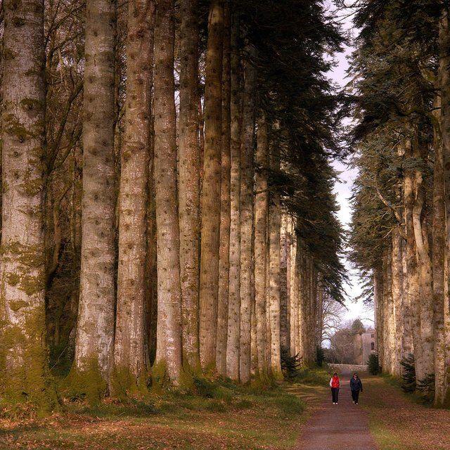 Woodstock Gardens, Kilkenny, Ireland