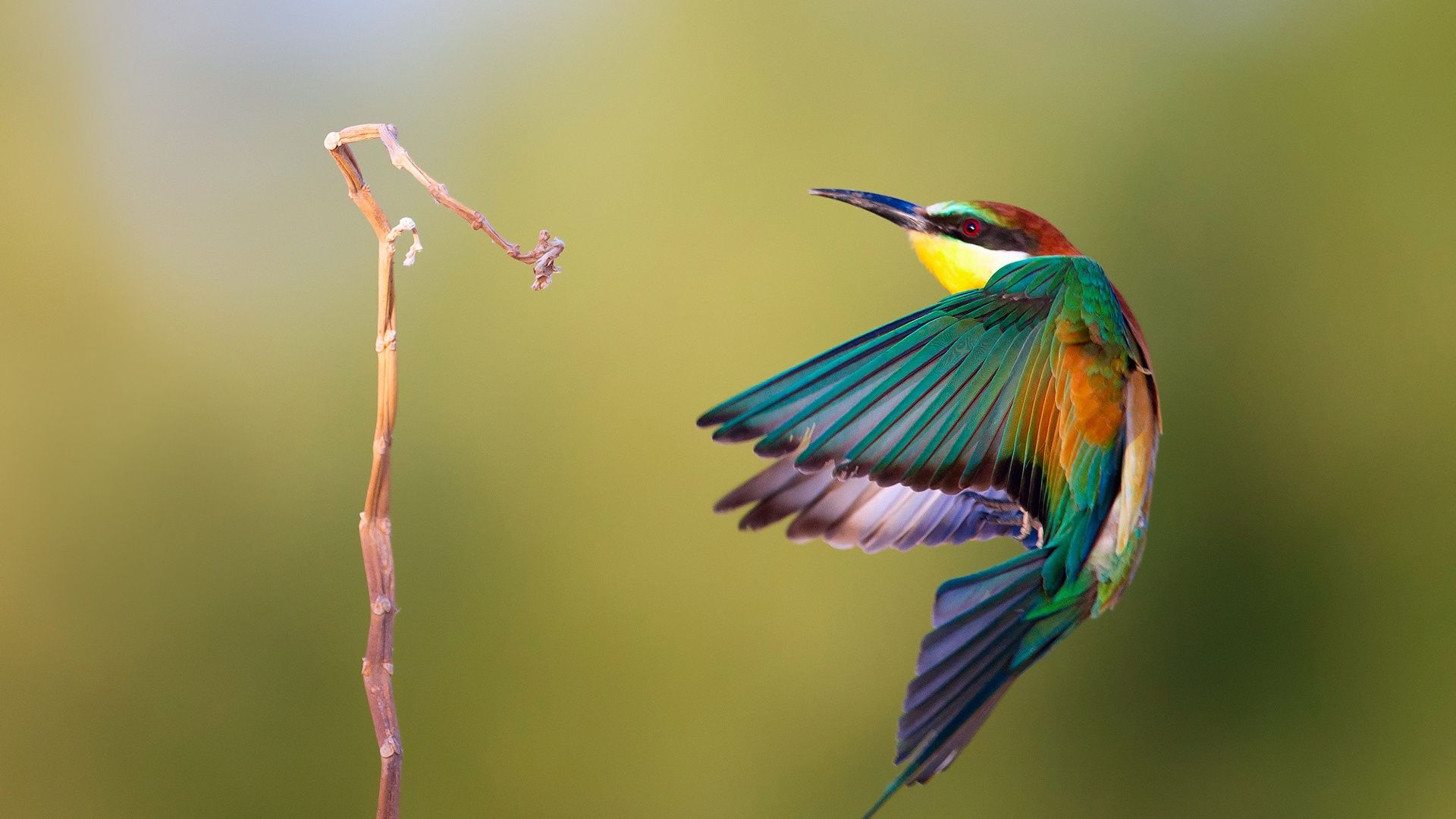 Kingfisher Flight Speed Photography Wallpaper