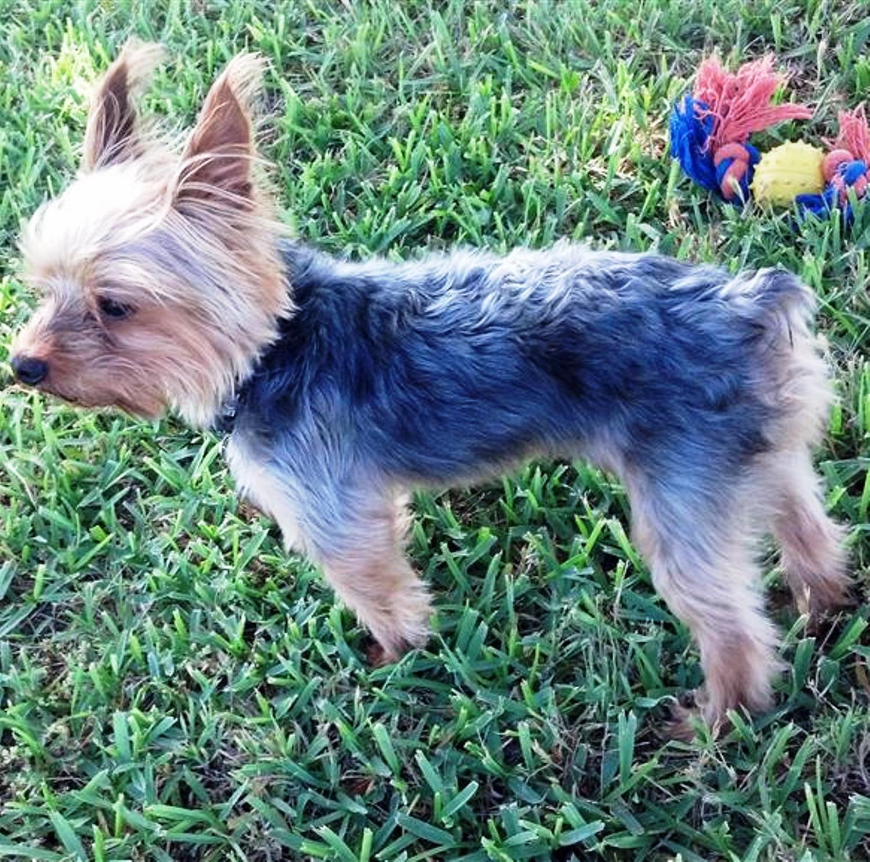 dogwalking dogwalkingviews sunnydays jake texas osc