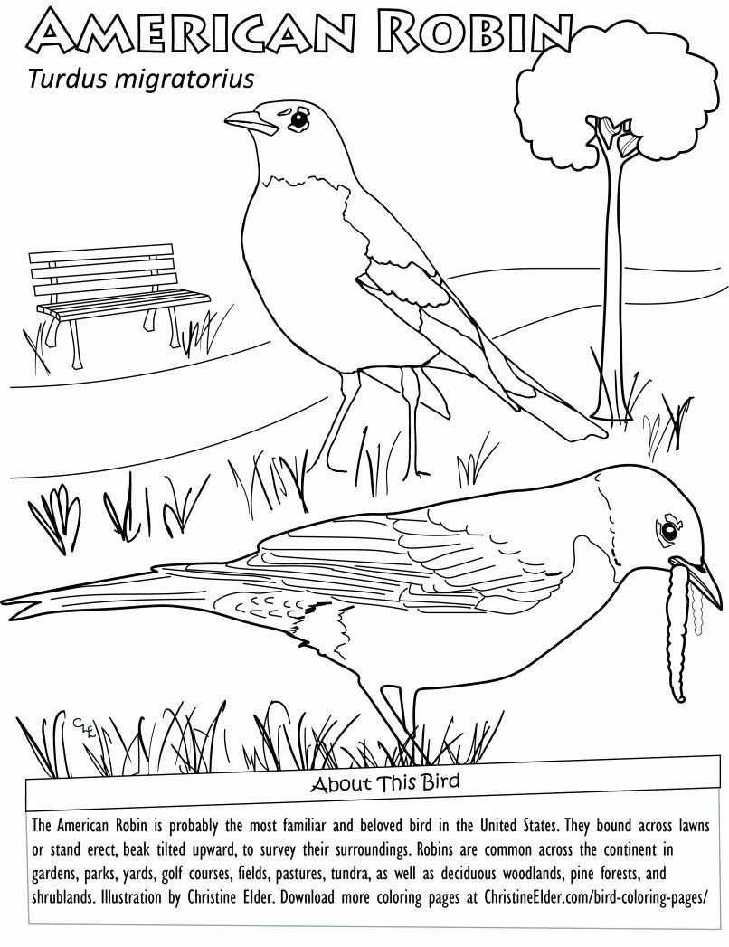 State Bird Coloring Page Lovely Bird Coloring Pages In 2020 Bird Coloring Pages Animal Coloring Pages Coloring Pages Winter