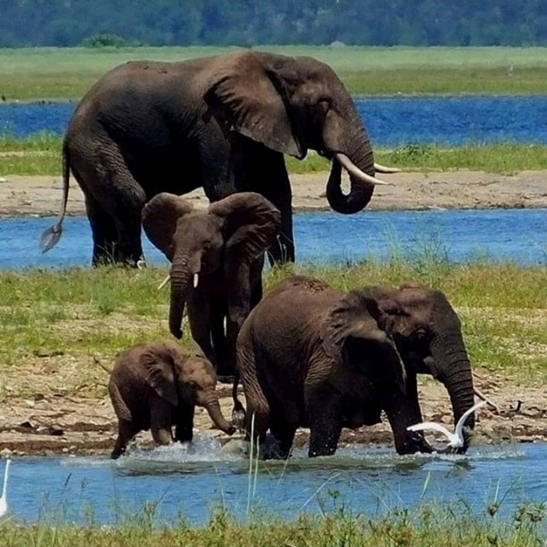 Family Group Elephant Love Wild Animals Photos