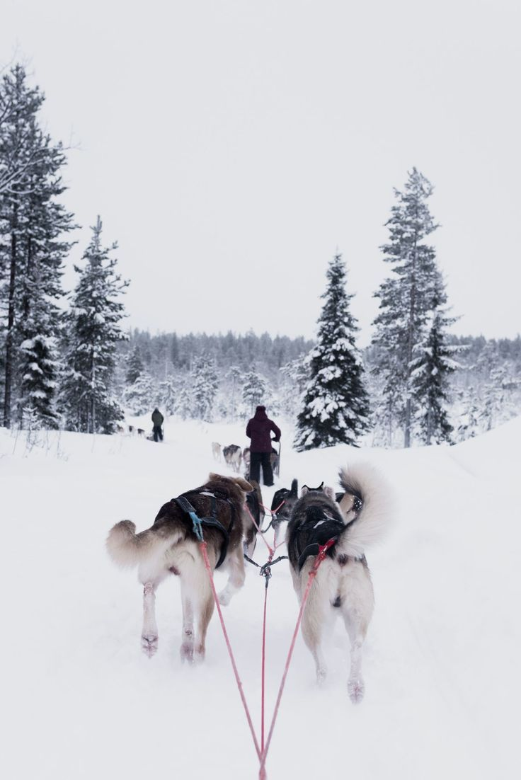 The Best Winter Destinations in Europe - Helene in Between Finland Travel Destinations | Finland Honeymoon | Backpack Finland | Backpacking | Finland Vacation | Finland Photography | Wanderlust | Budget | Europe Travel #travel #honeymoon #vacation #backpacking #budgettravel #bucketlist #wanderlust #Finland #Europe #visitFinland #TravelFinland #FinlandTravel