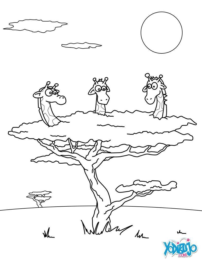 Dibujo para colorear : Jirafas en un árbol | giraffe zwart-wit ...