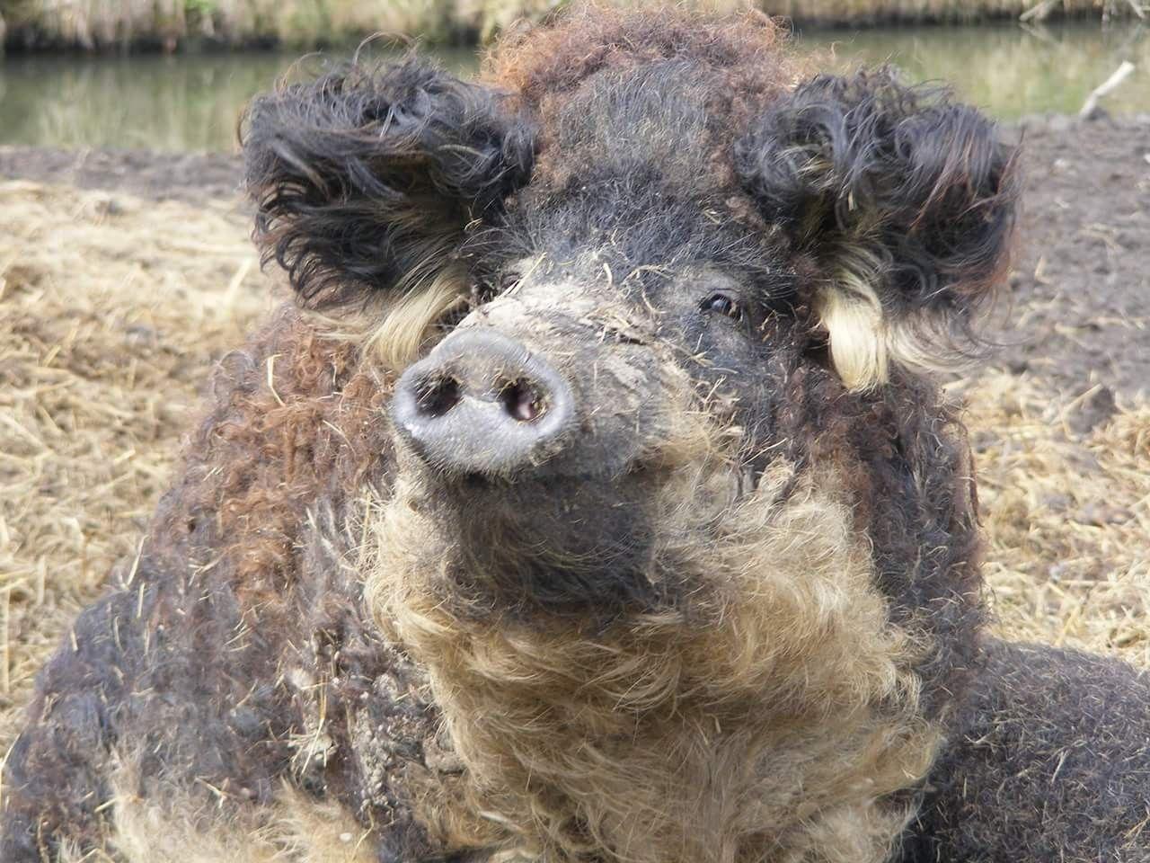 Pin von Silvia Zenetti auf schweindl | Schwein