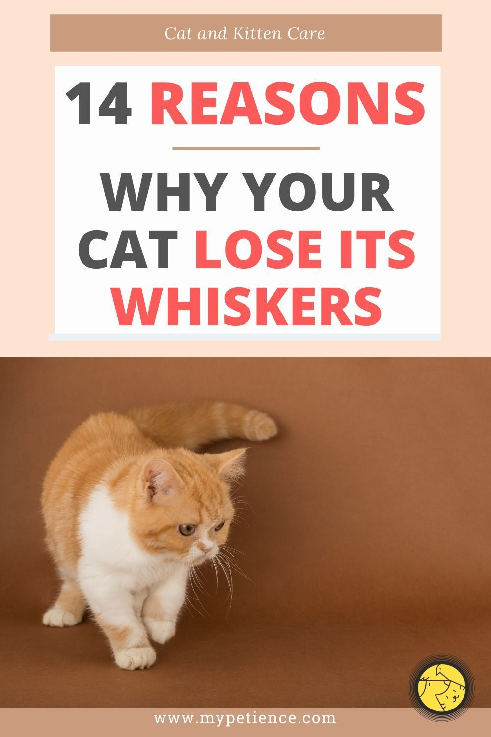 Do Cat Whiskers Grow Back Again If Pulled Out Or Burned You Will Find The Answer In This Article As This Is An Import In 2020 Kitten Care Cats And Kittens