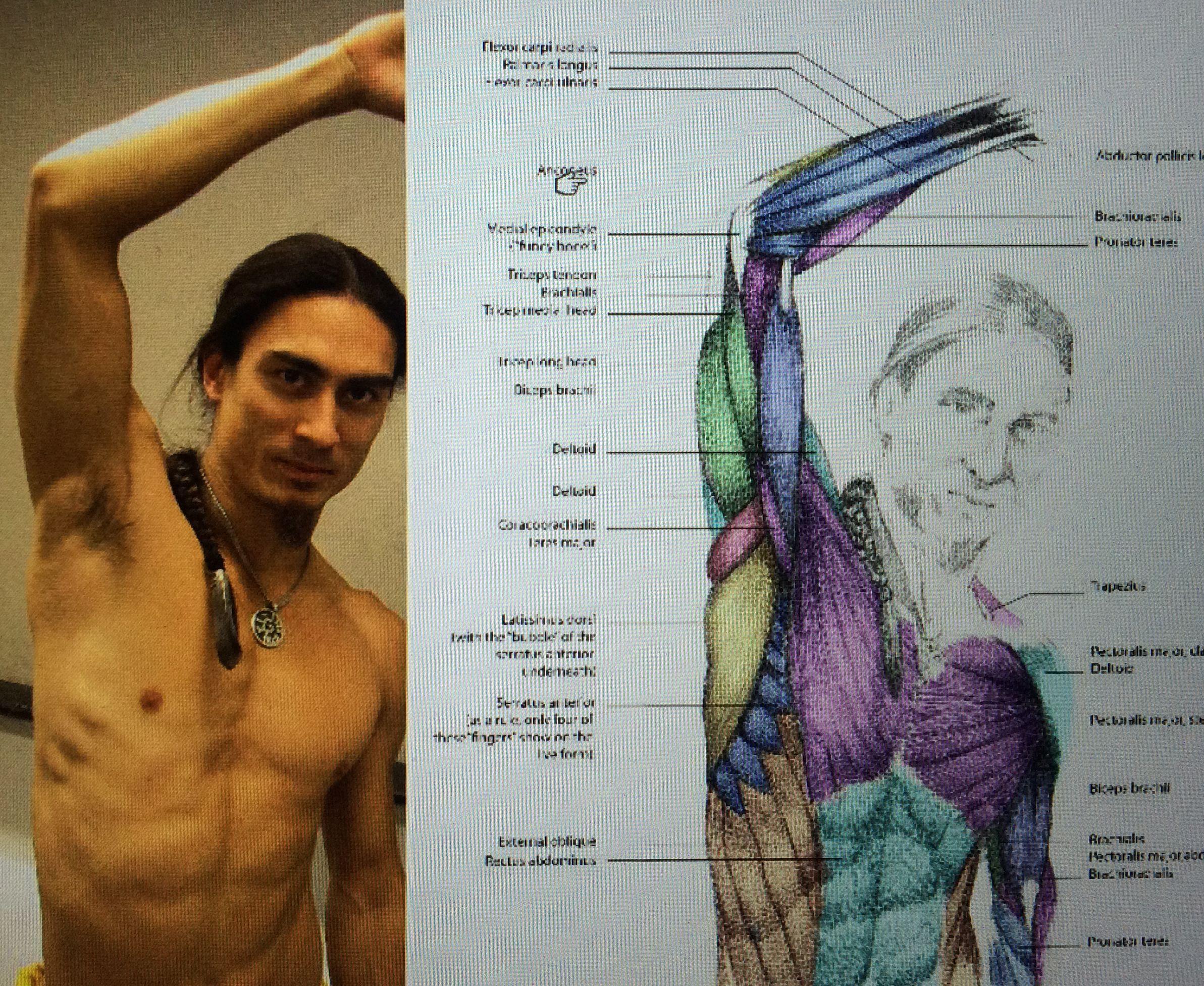 anatomy: raised arm, armpit | Illustration: How-to | Pinterest ...