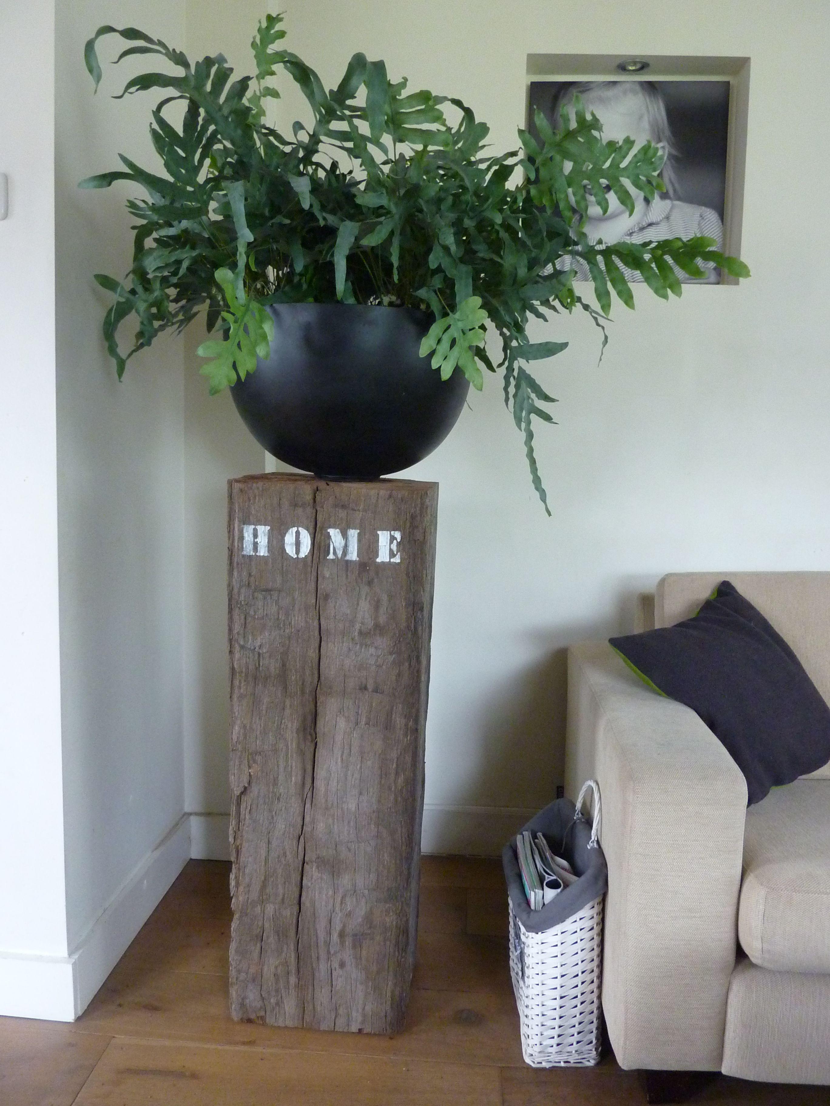 pinterest huiskamer planten vensterbank - Google zoeken | Planten ...